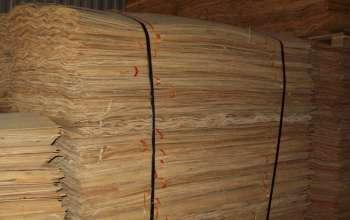 eucalyptus-core-veneer-a-gr