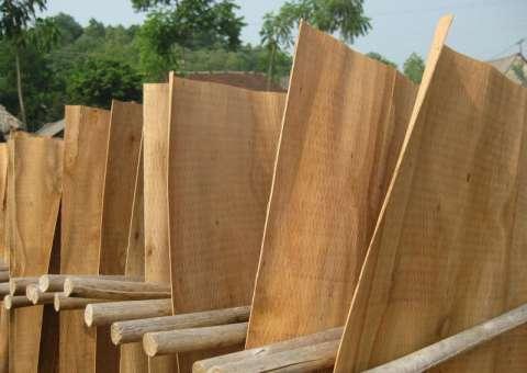 một số điều cần biết về gỗ ván bóc